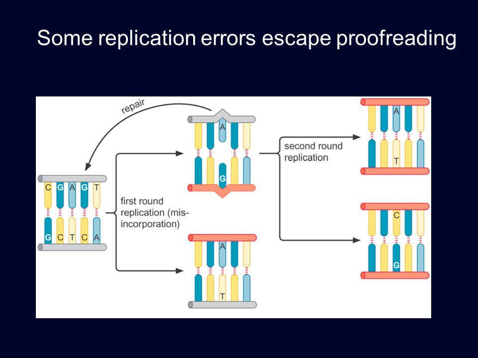 Some replication errors escape proofreading