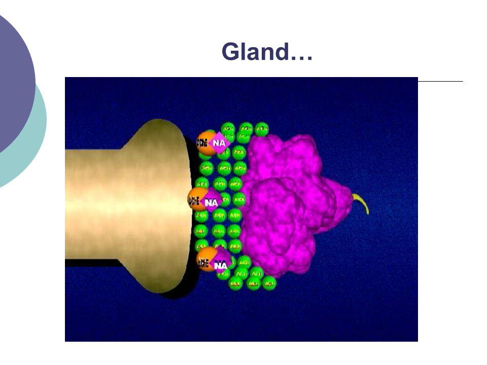 Gland…