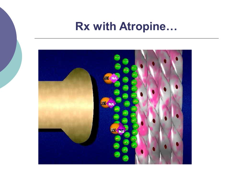 Rx with Atropine…