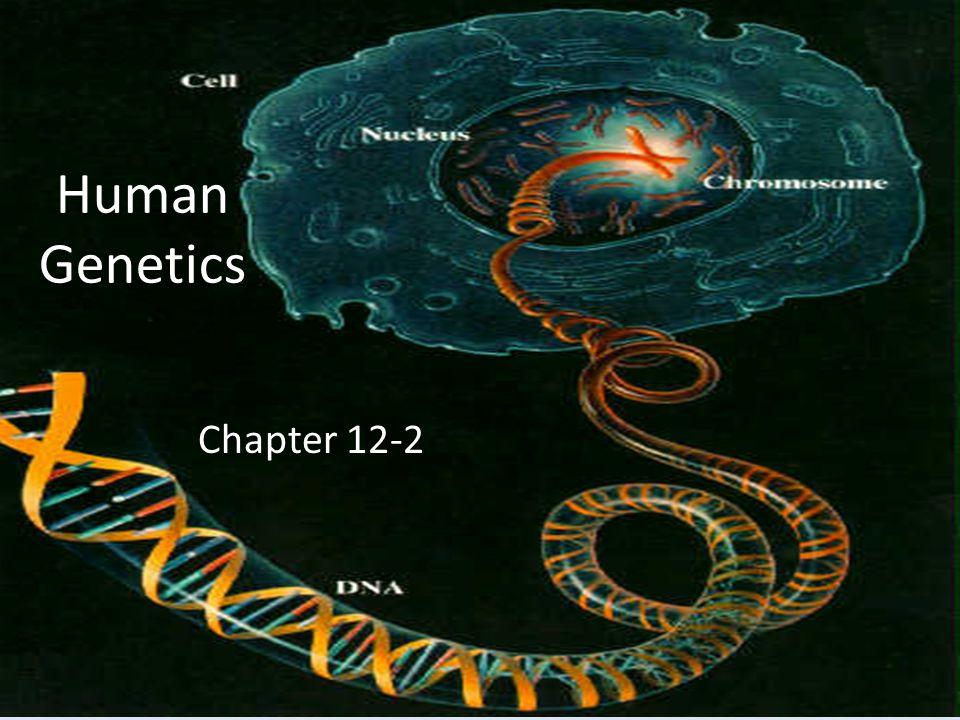 Human Genetics Chapter 12-2