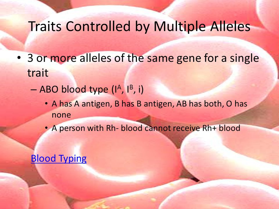 Traits Controlled by Multiple Alleles 3 or more alleles of the same gene for a single trait – ABO blood type (I A, I B, i) A has A antigen, B has B an