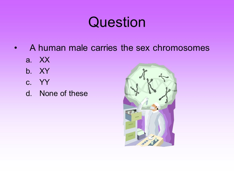 Question A human male carries the sex chromosomes a.XX b.XY c.YY d.None of these