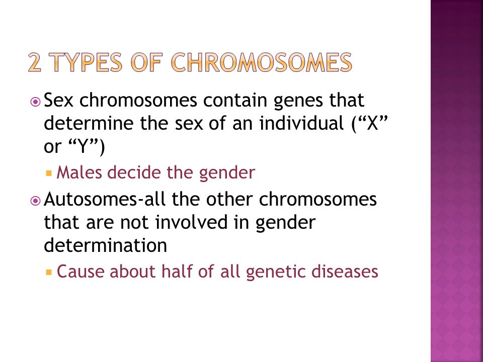  Sex chromosomes contain genes that determine the sex of an individual ( X or Y )  Males decide the gender  Autosomes-all the other chromosomes that are not involved in gender determination  Cause about half of all genetic diseases