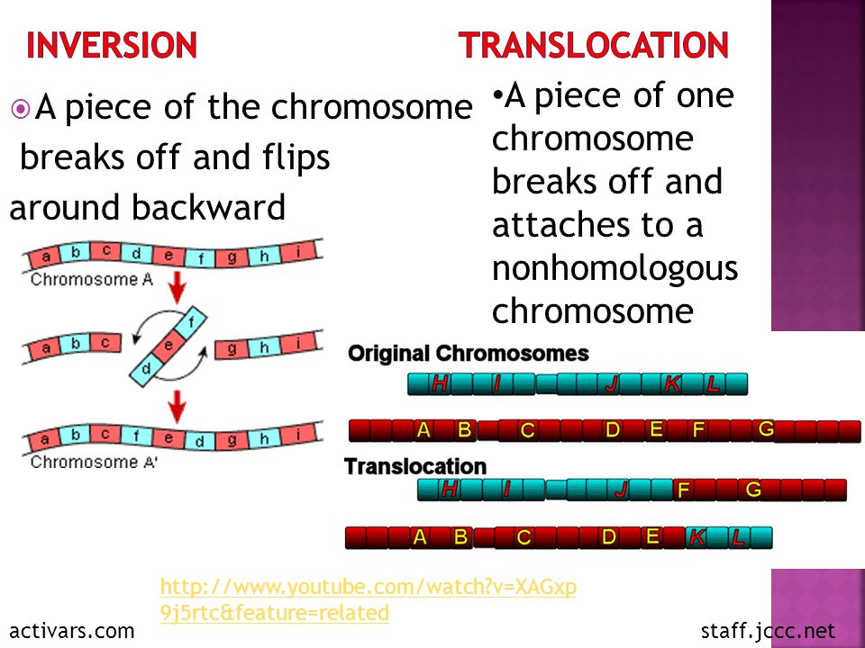  A piece of the chromosome breaks off and flips around backward activars.com A piece of one chromosome breaks off and attaches to a nonhomologous chromosome staff.jccc.net http://www.youtube.com/watch?v=XAGxp 9j5rtc&feature=related