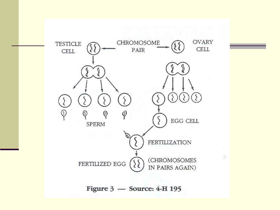 Genetics Two basic types of genetic action: Qualitative Quantitative Qualitative: Particular trait influenced by single pair of genes Or maybe 2 or 3 Quantitative: Influenced by a number of genes