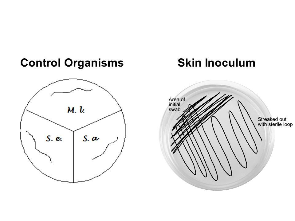 Control OrganismsSkin Inoculum