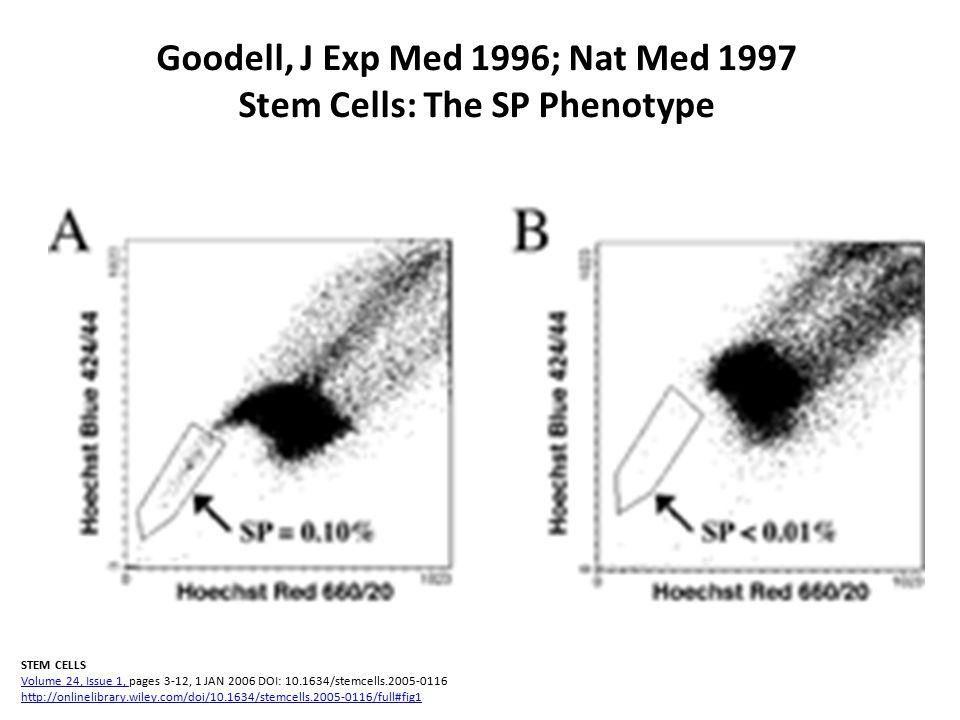 Goodell, J Exp Med 1996; Nat Med 1997 Stem Cells: The SP Phenotype STEM CELLS Volume 24, Issue 1, pages 3-12, 1 JAN 2006 DOI: 10.1634/stemcells.2005-0116 http://onlinelibrary.wiley.com/doi/10.1634/stemcells.2005-0116/full#fig1 Volume 24, Issue 1, http://onlinelibrary.wiley.com/doi/10.1634/stemcells.2005-0116/full#fig1