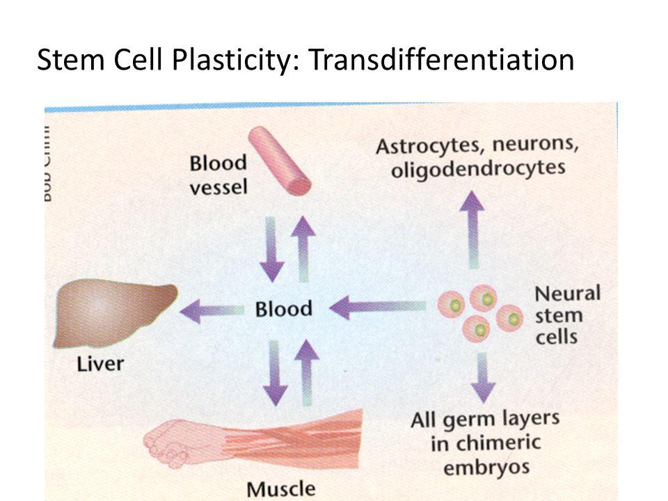 Stem Cell Plasticity: Transdifferentiation