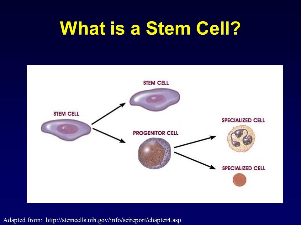 Medical Tourism: adipose derived adult stromal stem cells