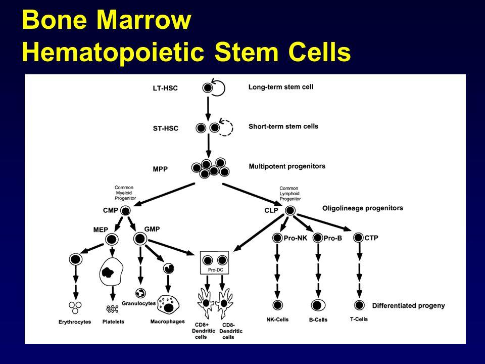 Bone Marrow Hematopoietic Stem Cells