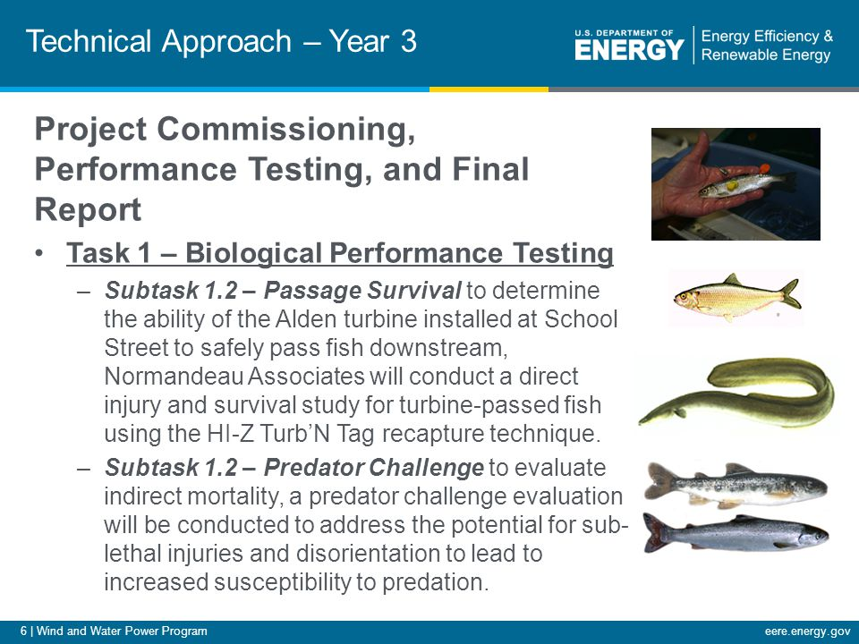 6 | Wind and Water Power Programeere.energy.gov Technical Approach – Year 3 Project Commissioning, Performance Testing, and Final Report Task 1 – Biological Performance Testing –Subtask 1.2 – Passage Survival to determine the ability of the Alden turbine installed at School Street to safely pass fish downstream, Normandeau Associates will conduct a direct injury and survival study for turbine-passed fish using the HI-Z Turb'N Tag recapture technique.