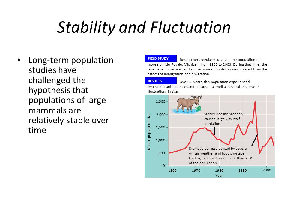 Stability and Fluctuation Long-term population studies have challenged the hypothesis that populations of large mammals are relatively stable over tim