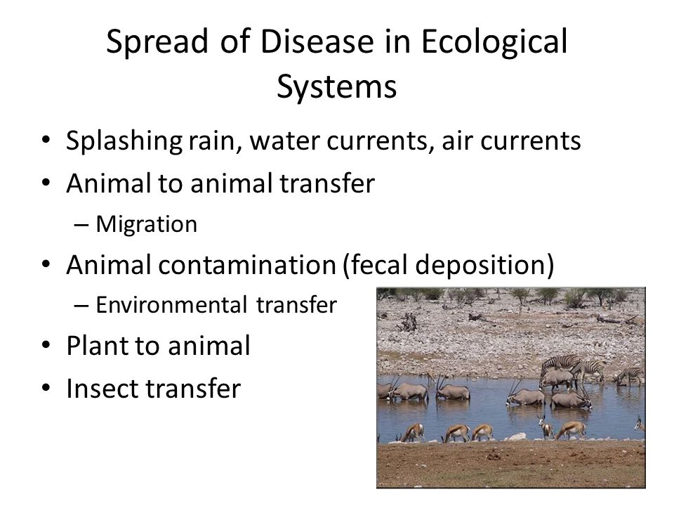 Spread of Disease in Ecological Systems Splashing rain, water currents, air currents Animal to animal transfer – Migration Animal contamination (fecal