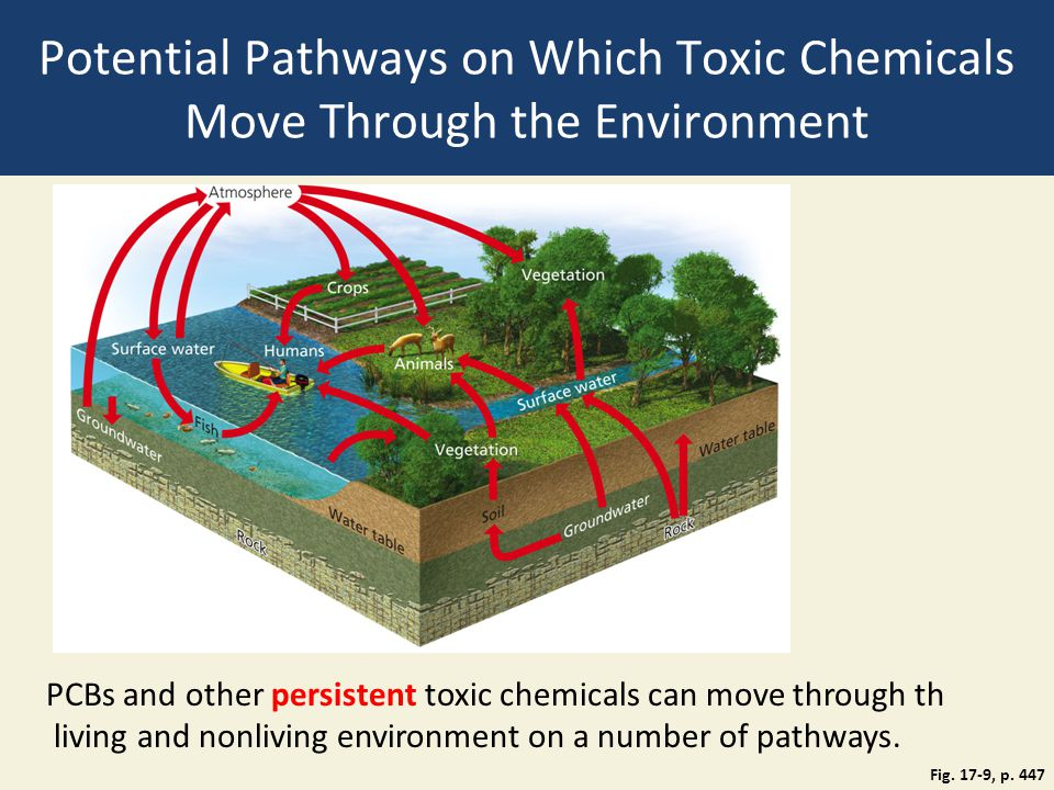 Potential Pathways on Which Toxic Chemicals Move Through the Environment Fig. 17-9, p. 447 PCBs and other persistent toxic chemicals can move through