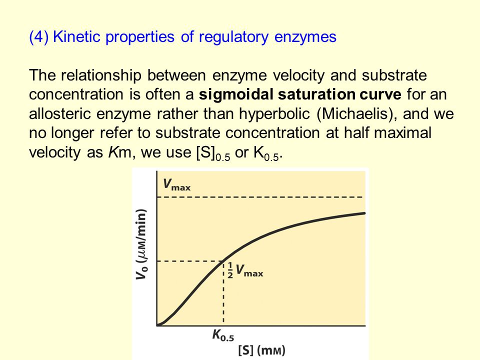 (4) Kinetic properties of regulatory enzymes The relationship between enzyme velocity and substrate concentration is often a sigmoidal saturation curv