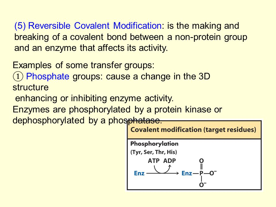 (5) Reversible Covalent Modification: is the making and breaking of a covalent bond between a non-protein group and an enzyme that affects its activit