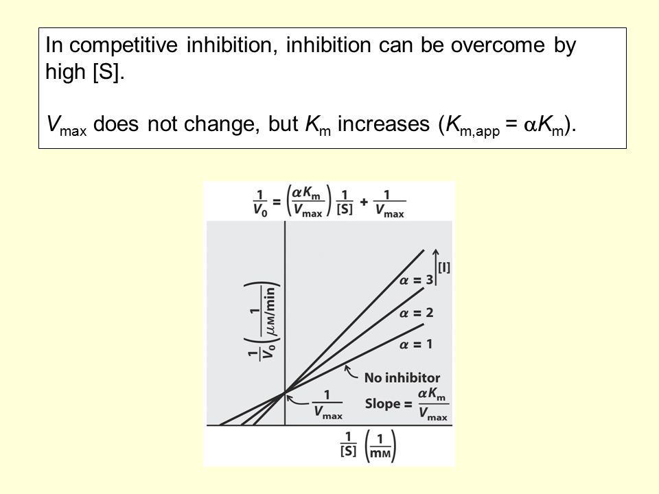 In competitive inhibition, inhibition can be overcome by high [S]. V max does not change, but K m increases (K m,app =  K m ).