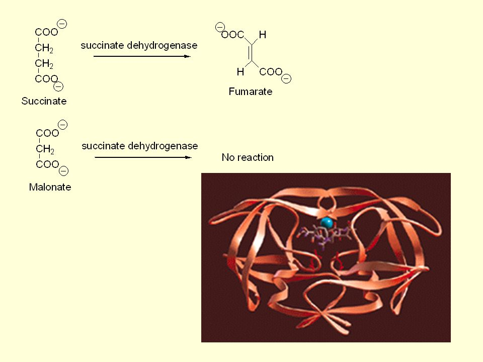 ② Adenylation: the transfer of adenylate from ATP ③ ADP-ribosylation: the transfer of an adenosine diphosphate- ribosyl moiety from NAD+ ④ Uridylation ⑤ Methylation