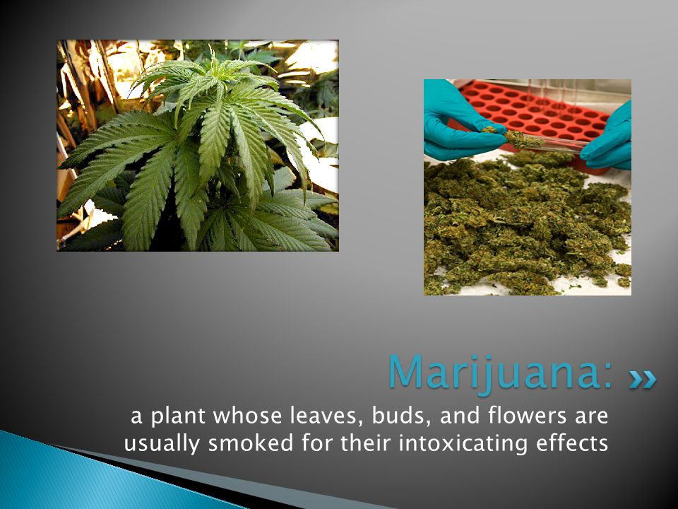  Also known as grass, weed, and pot  Hashish, or hash, is a stronger form of marijuana  An individual who uses marijuana is 17 times more likely to use cocaine than one who has never used marijuana.