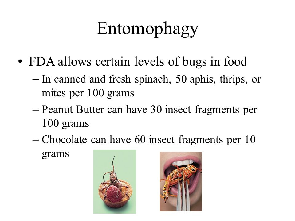 Entomophagy FDA allows certain levels of bugs in food – In canned and fresh spinach, 50 aphis, thrips, or mites per 100 grams – Peanut Butter can have 30 insect fragments per 100 grams – Chocolate can have 60 insect fragments per 10 grams
