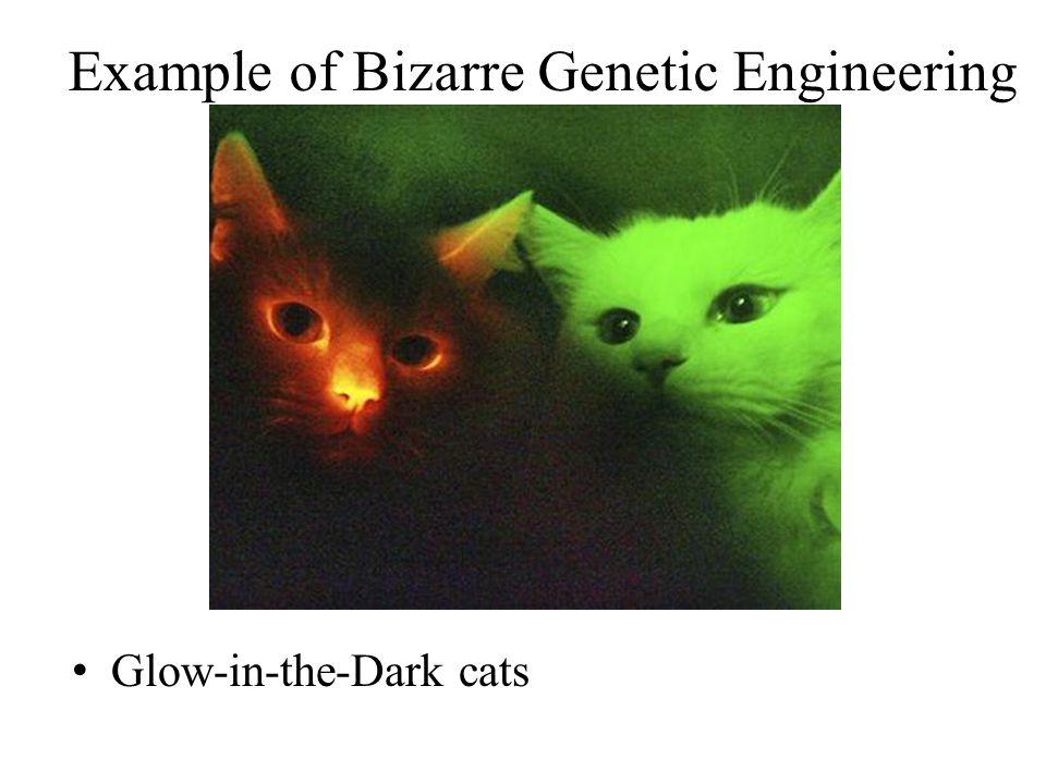 Example of Bizarre Genetic Engineering Glow-in-the-Dark cats