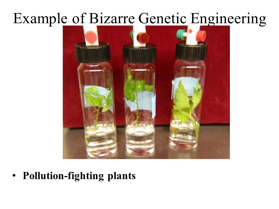 Pollution-fighting plants Example of Bizarre Genetic Engineering