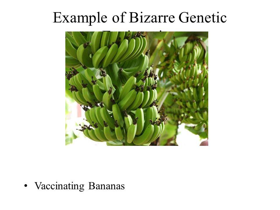 Vaccinating Bananas