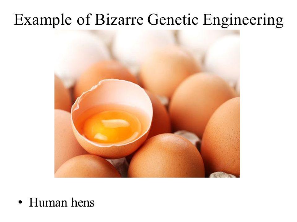 Human hens Example of Bizarre Genetic Engineering