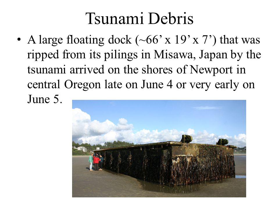Tsunami Debris A large floating dock (~66' x 19' x 7') that was ripped from its pilings in Misawa, Japan by the tsunami arrived on the shores of Newport in central Oregon late on June 4 or very early on June 5.
