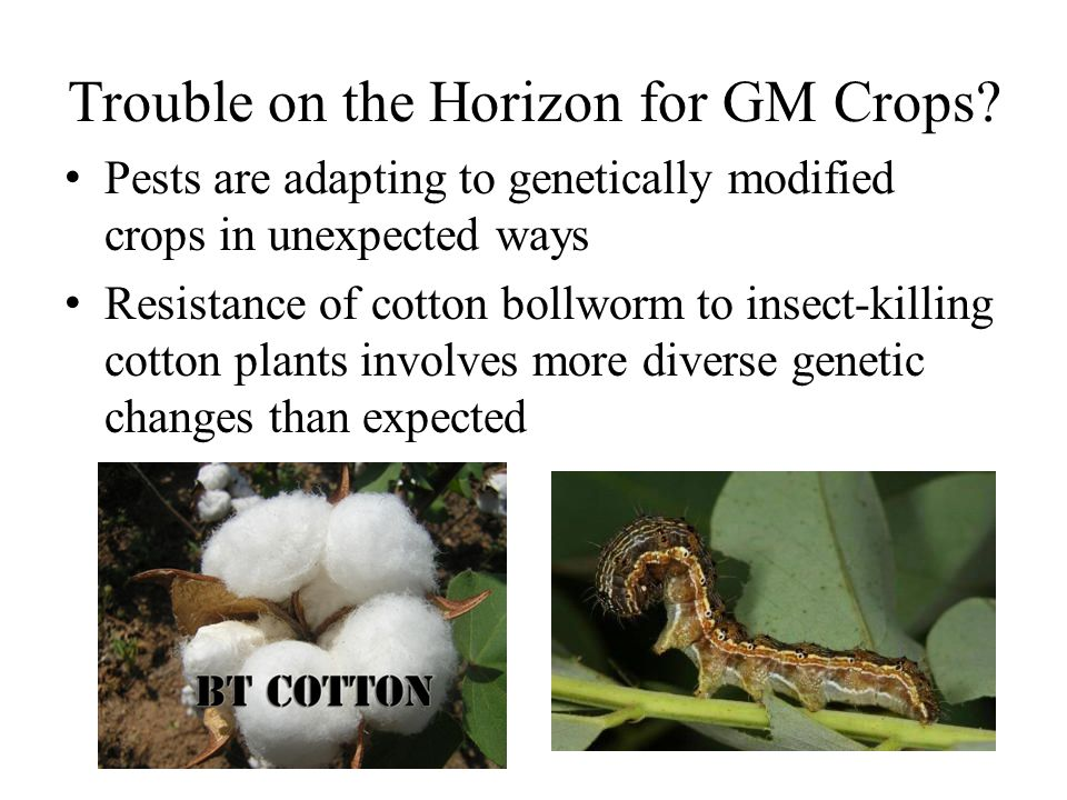 Trouble on the Horizon for GM Crops.
