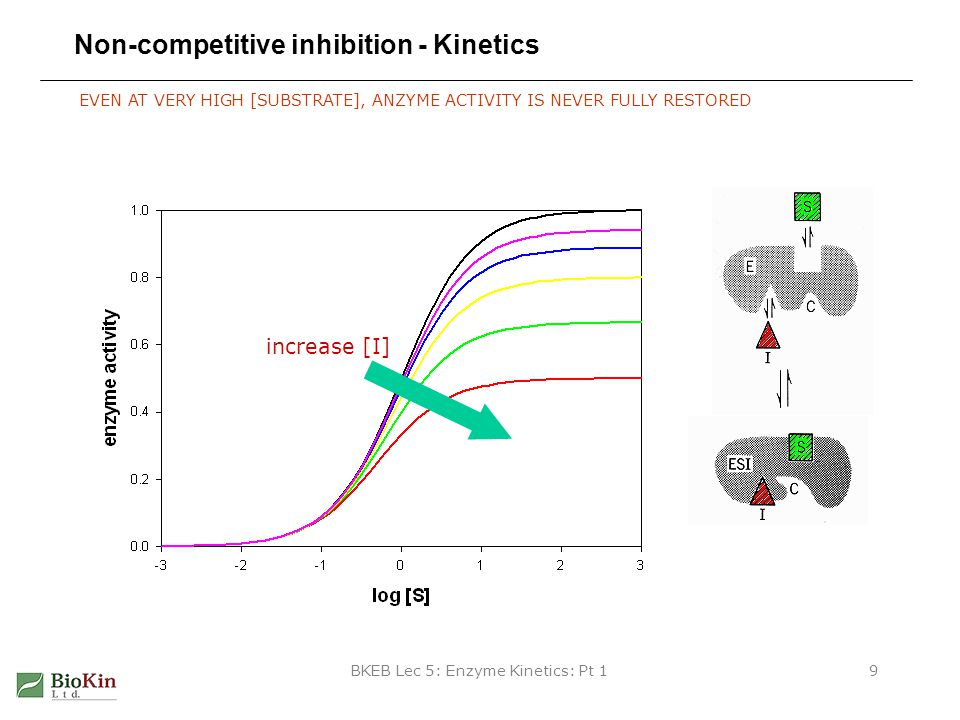 BKEB Lec 5: Enzyme Kinetics: Pt 19 Non-competitive inhibition - Kinetics EVEN AT VERY HIGH [SUBSTRATE], ANZYME ACTIVITY IS NEVER FULLY RESTORED increa
