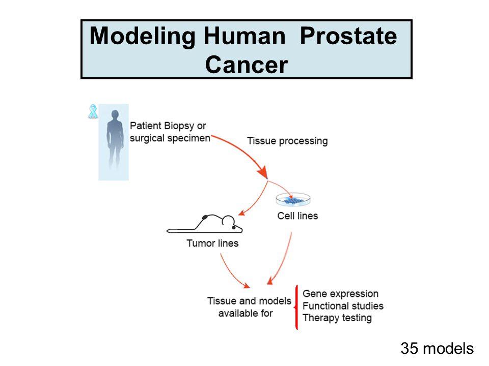 Modeling Human Prostate Cancer 35 models