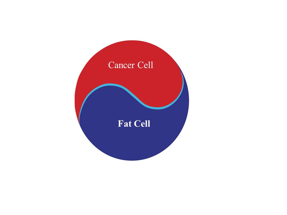 Cancer Cell Fat Cell
