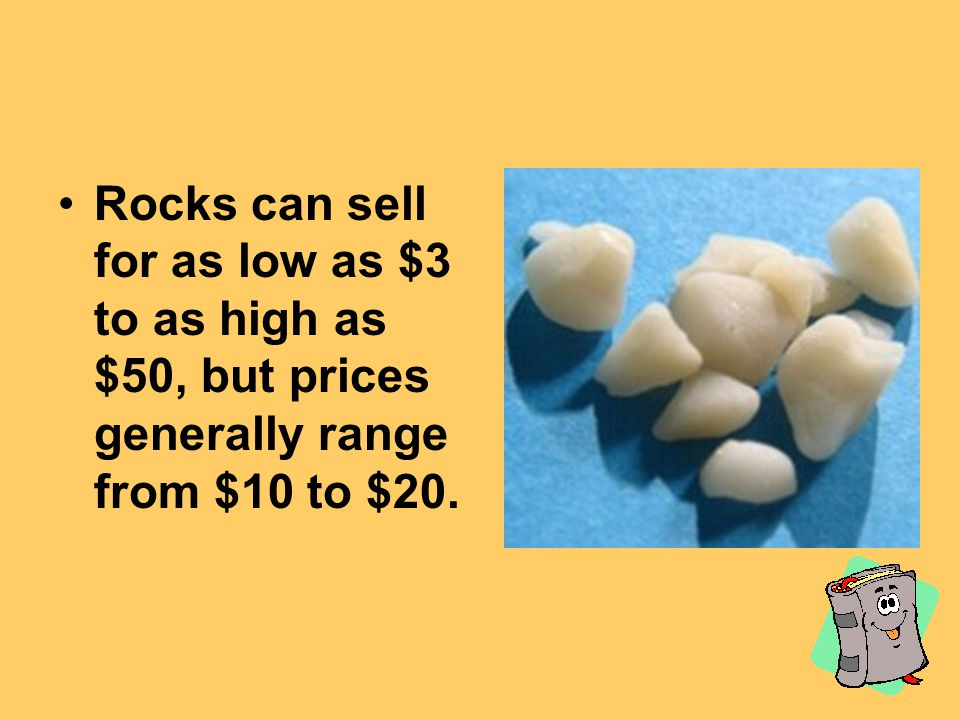 Rocks can sell for as low as $3 to as high as $50, but prices generally range from $10 to $20.