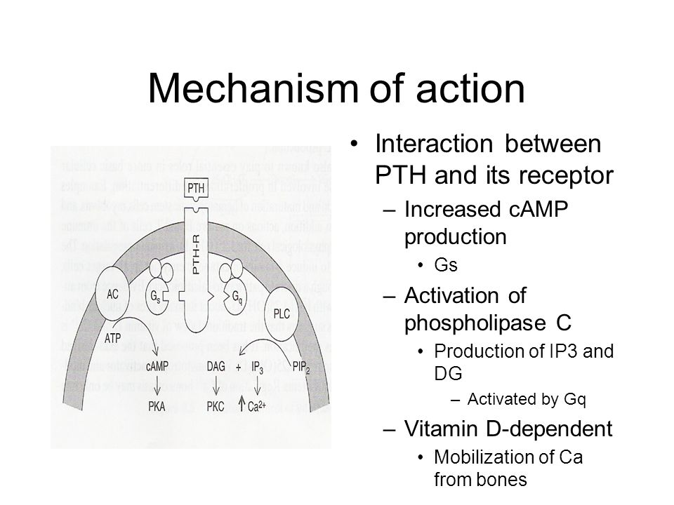 Mechanism of action Interaction between PTH and its receptor –Increased cAMP production Gs –Activation of phospholipase C Production of IP3 and DG –Activated by Gq –Vitamin D-dependent Mobilization of Ca from bones