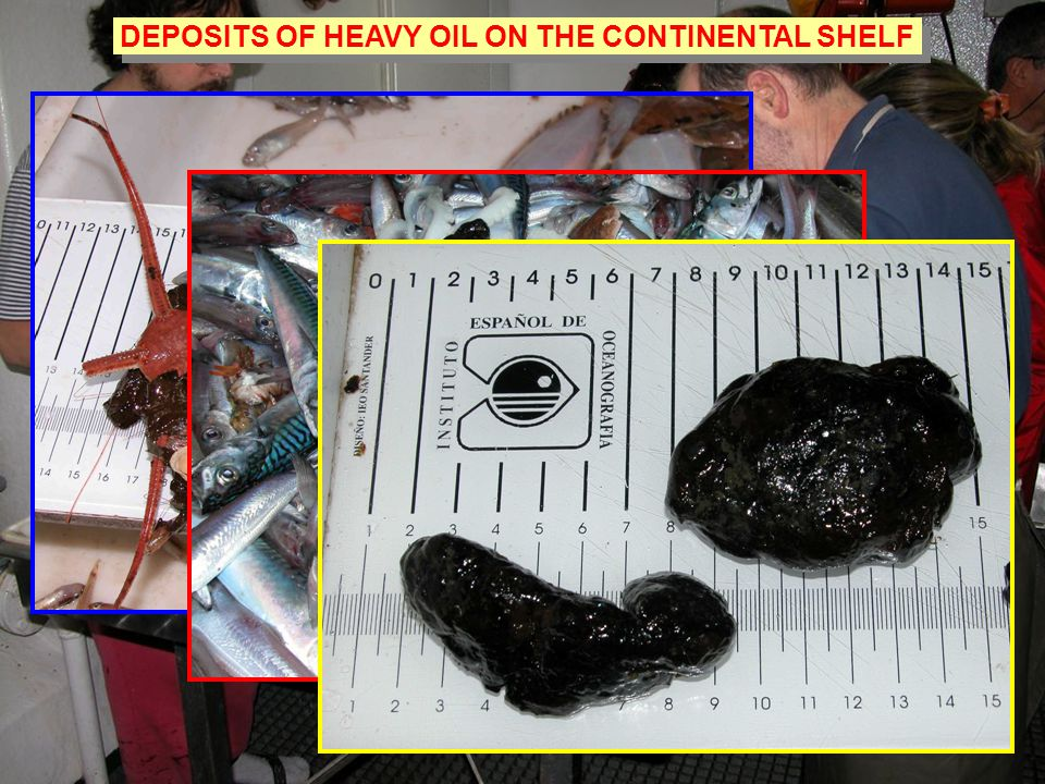 DEPOSITS OF HEAVY OIL ON THE CONTINENTAL SHELF