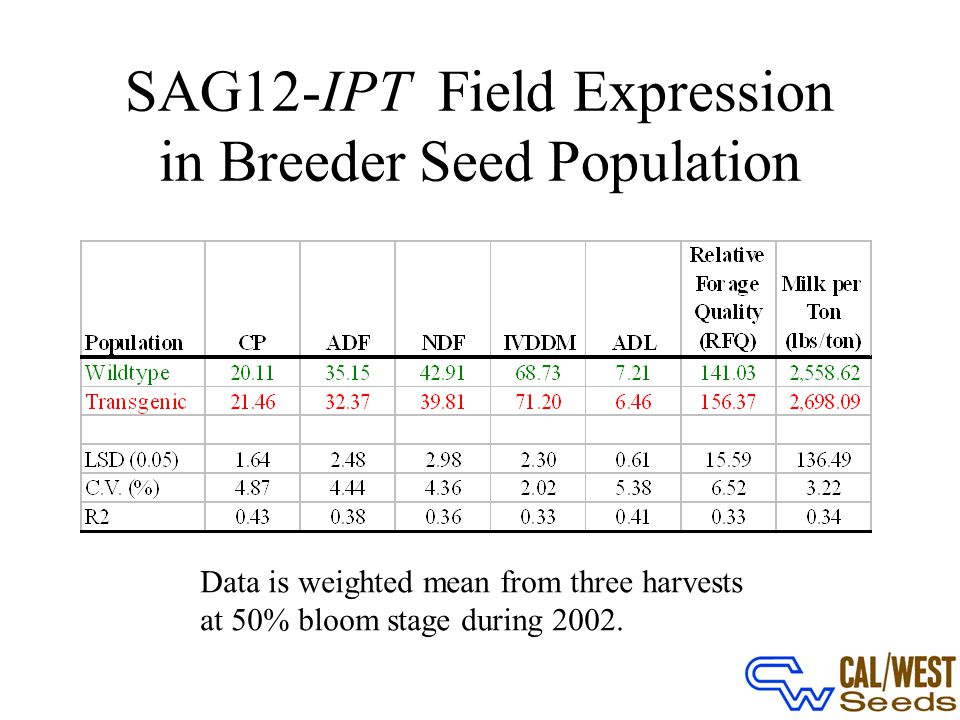 SAG12-IPT Field Expression in Breeder Seed Population Data is weighted mean from three harvests at 50% bloom stage during 2002.