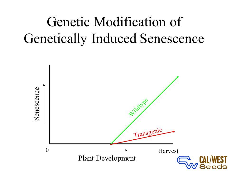Genetic Modification of Genetically Induced Senescence 0 Plant Development Harvest Senescence Wildtype Transgenic