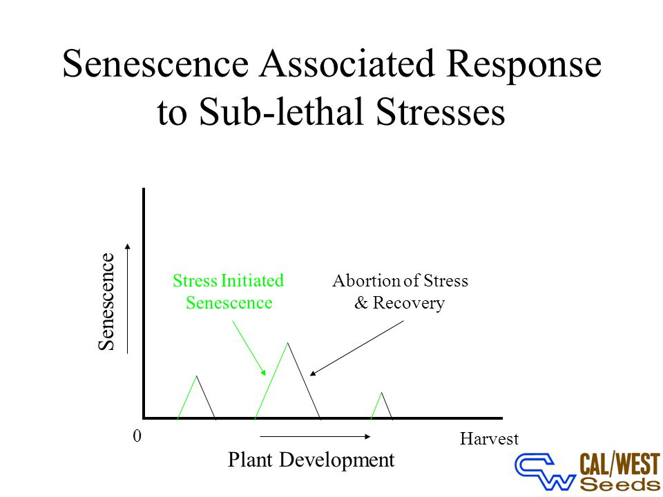0 Plant Development Harvest Senescence Stress Initiated Senescence Abortion of Stress & Recovery Reducing the Expression of DHS and elF-5A