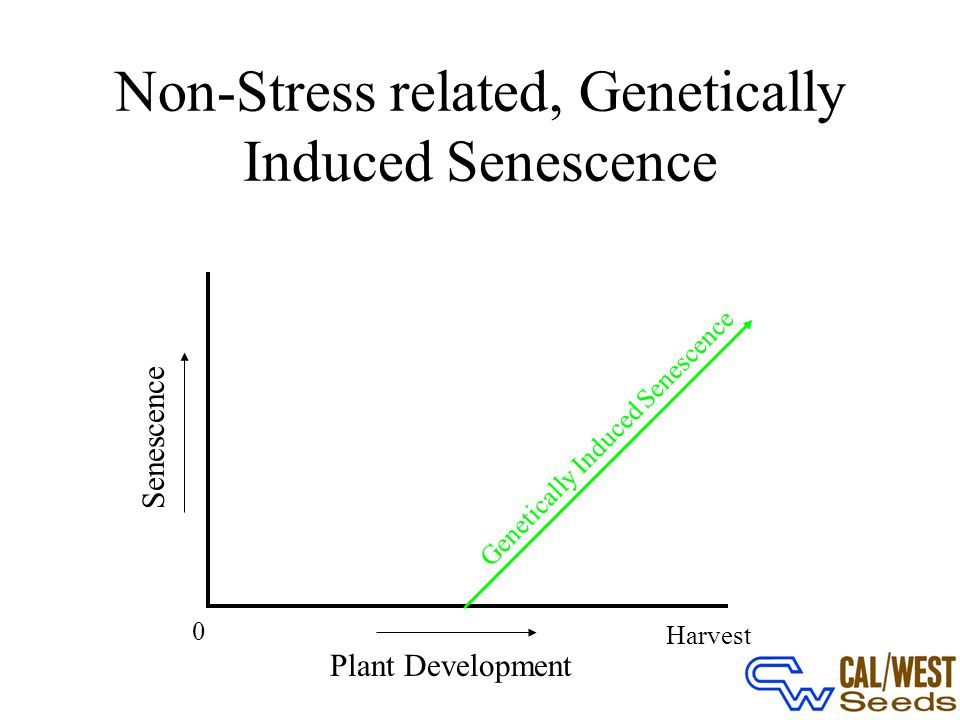 Non-Stress related, Genetically Induced Senescence 0 Plant Development Harvest Senescence Genetically Induced Senescence