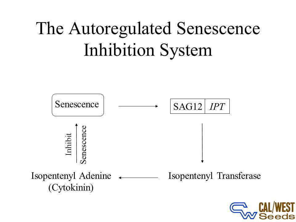 The Autoregulated Senescence Inhibition System Senescence SAG12IPT Isopentenyl TransferaseIsopentenyl Adenine (Cytokinin) Senescence Inhibit