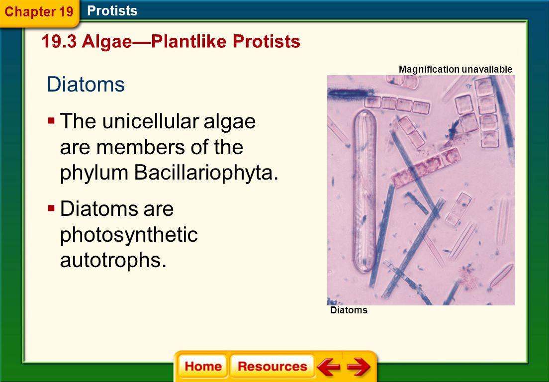 Protists Red algaeGreen algae 19.3 Algae—Plantlike Protists Chapter 19