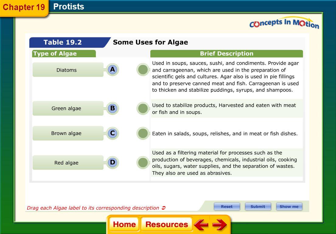 Protists 19.3 Algae—Plantlike Protists Chapter 19