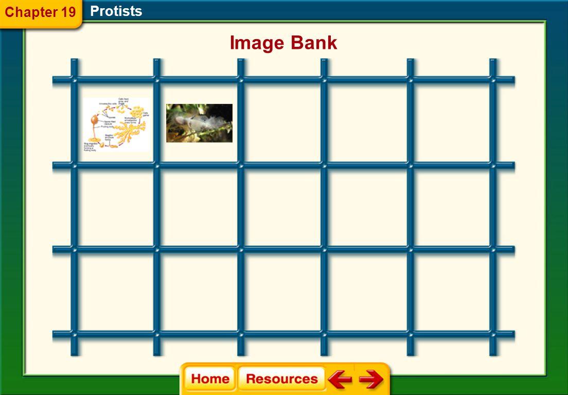 Protists Image Bank Chapter 19