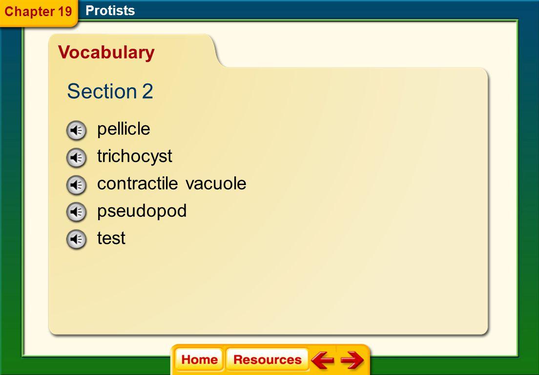 protozoan microsporidium Protists Vocabulary Section 1 Chapter 19