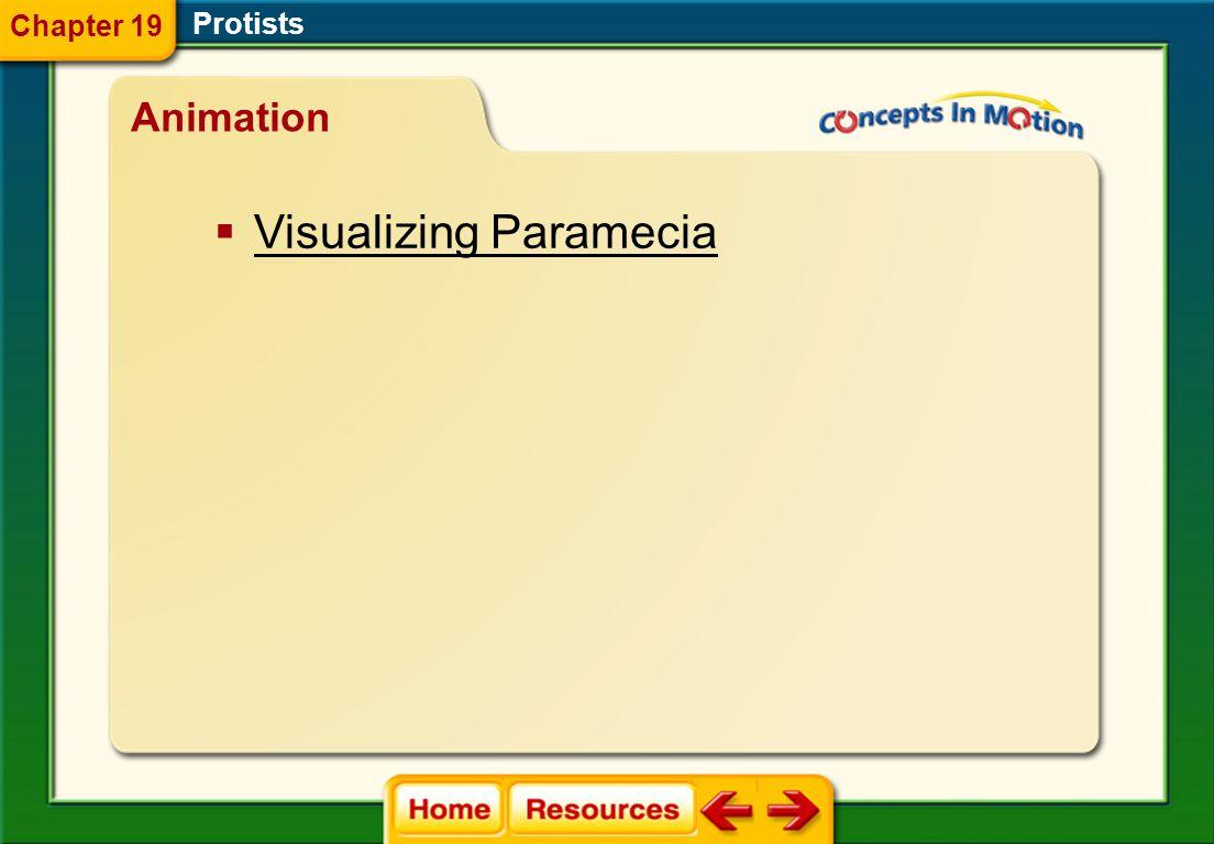 plasmodium acrasin Protists Vocabulary Section 4 Chapter 19
