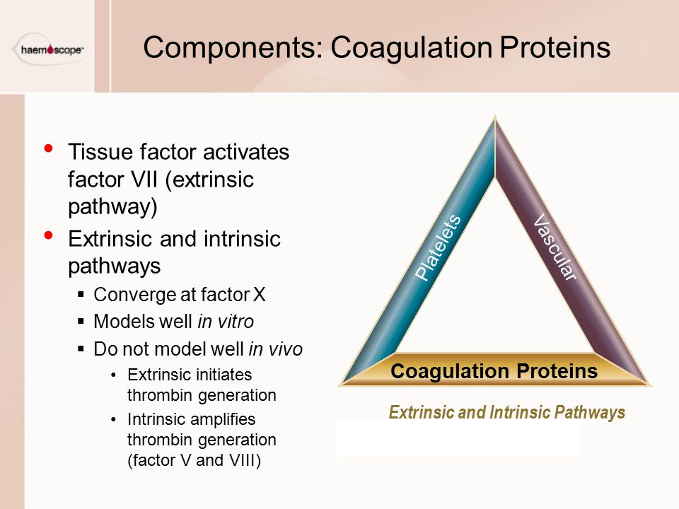 Components: Coagulation Proteins Tissue factor activates factor VII (extrinsic pathway) Extrinsic and intrinsic pathways  Converge at factor X  Mode