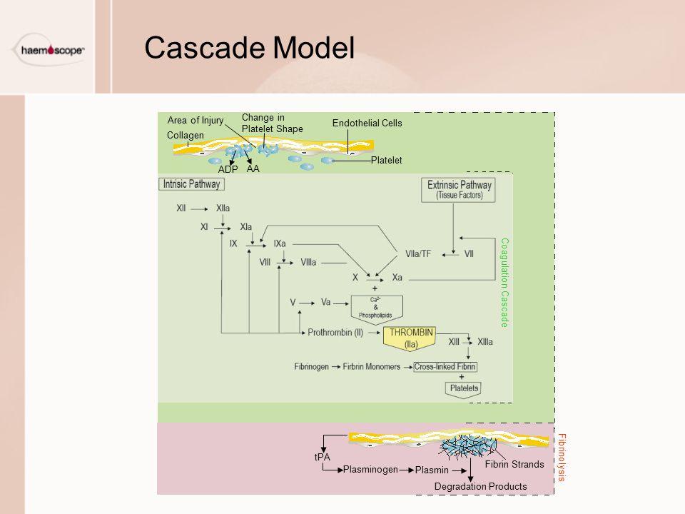 Cascade Model Platelet Endothelial Cells Change in Platelet Shape Area of Injury Collagen ADP AA tPA Plasminogen Plasmin Fibrin Strands Degradation Pr