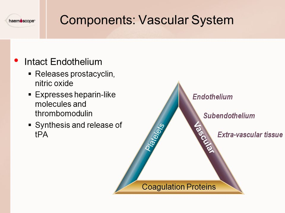 Components: Vascular System Intact Endothelium  Releases prostacyclin, nitric oxide  Expresses heparin-like molecules and thrombomodulin  Synthesis