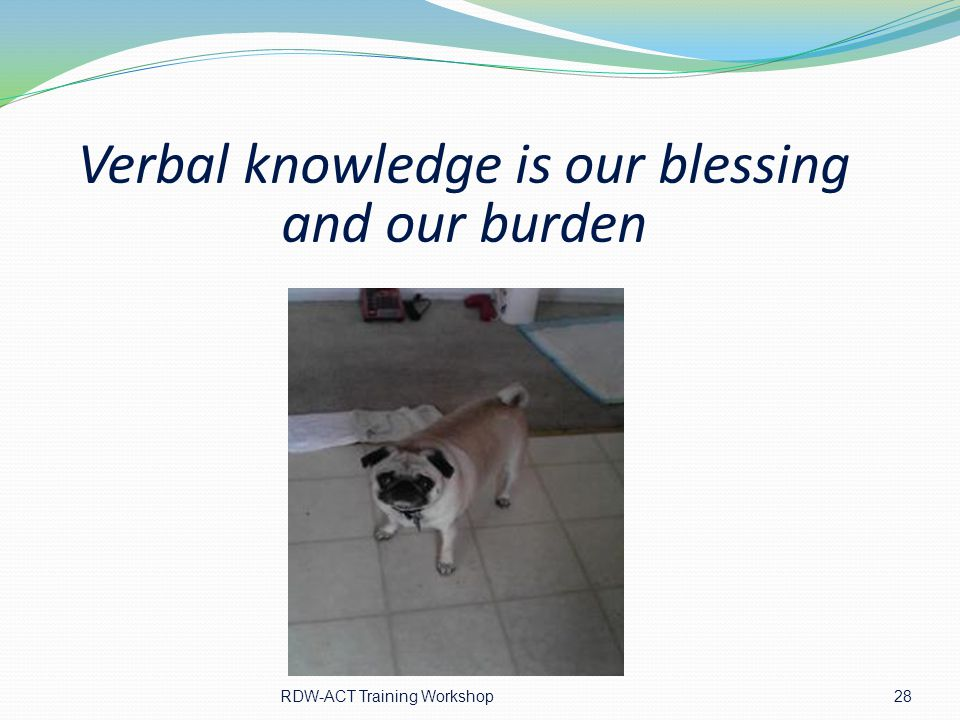 Verbal knowledge is our blessing and our burden 28 RDW-ACT Training Workshop